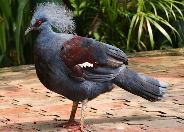 golub-ptica-opisanie-osobennosti-vidy-obraz-zhizni-i-sreda-obitaniya-golubya-1.jpg