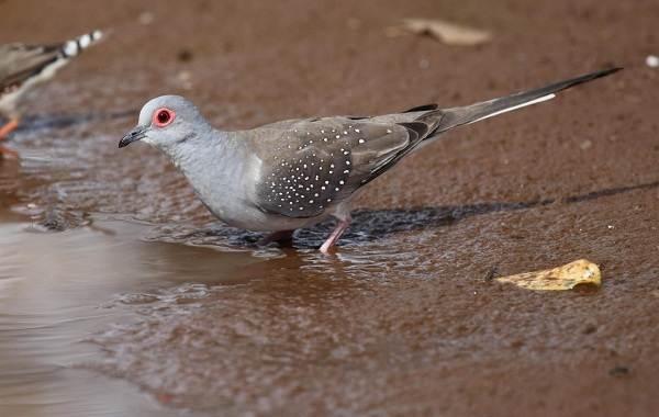 golub-ptica-opisanie-osobennosti-vidy-obraz-zhizni-i-sreda-obitaniya-golubya-2.jpg