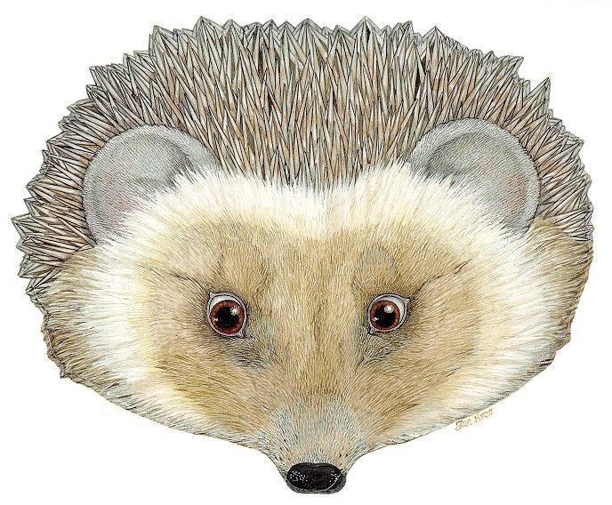 hedgehog-2-maska.JPG