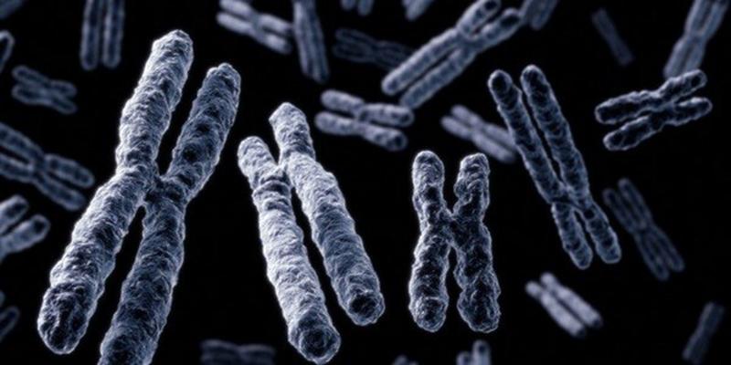 hromosomi-quothquot-i-quotyquot.jpg
