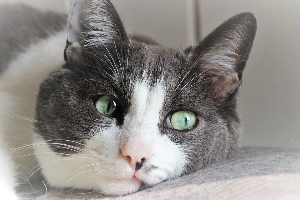 https-cdn-pixabay-com-photo-2018-10-21-02-38-cat.jpeg