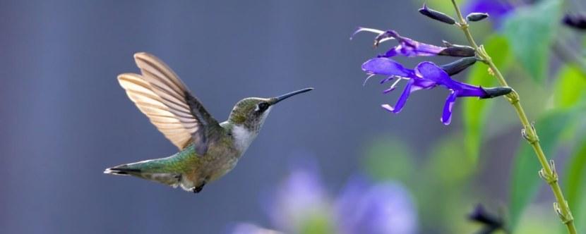 Kolibri-11.jpg