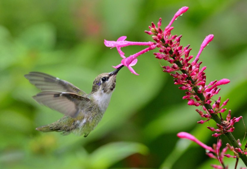 Kolibri-12.jpg