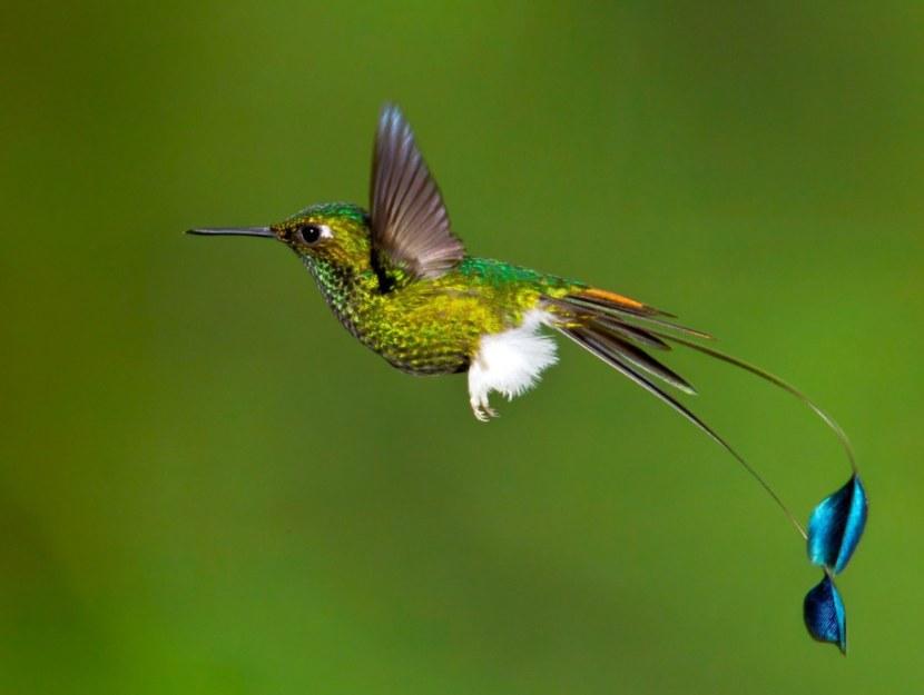 Kolibri-13.jpg