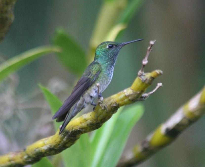 Kolibri-16.jpg