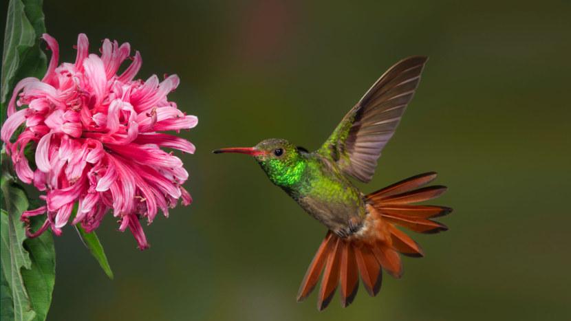 Kolibri-17.jpg