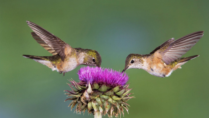 Kolibri-23.jpg