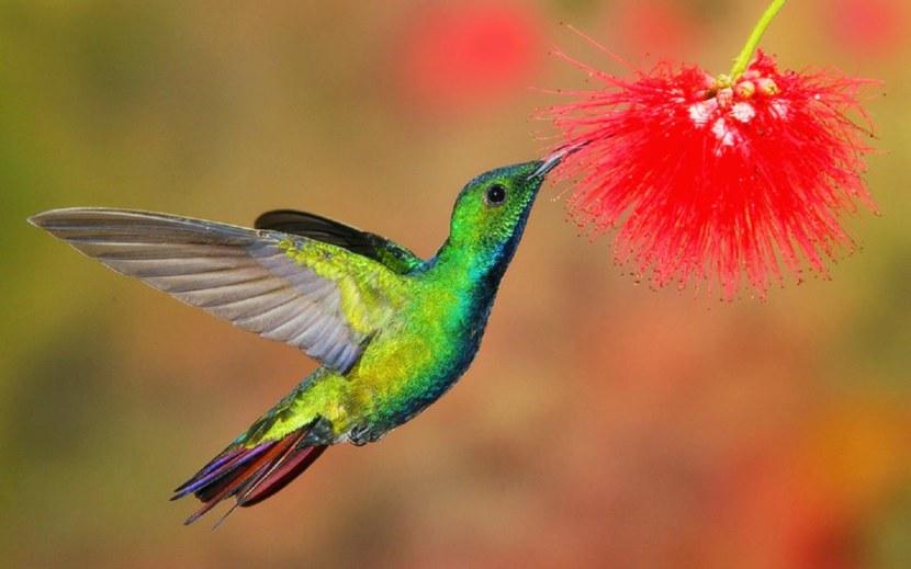 Kolibri-24.jpg