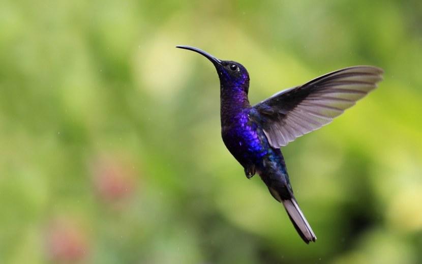 Kolibri-28.jpg
