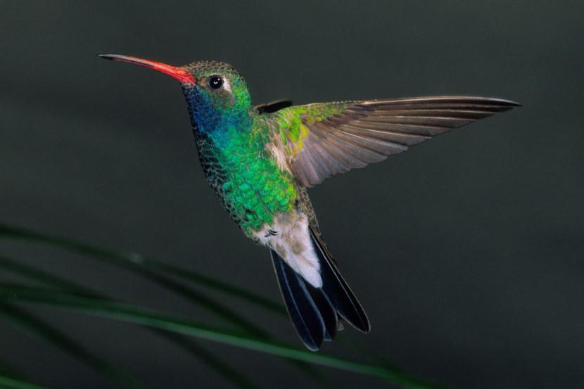 Kolibri-29.jpg