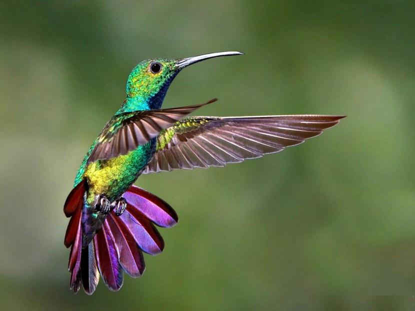 Kolibri-30.jpg