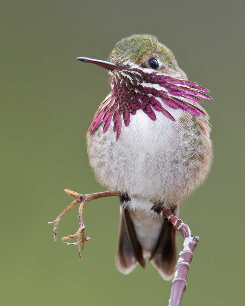 Kolibri-31.jpg