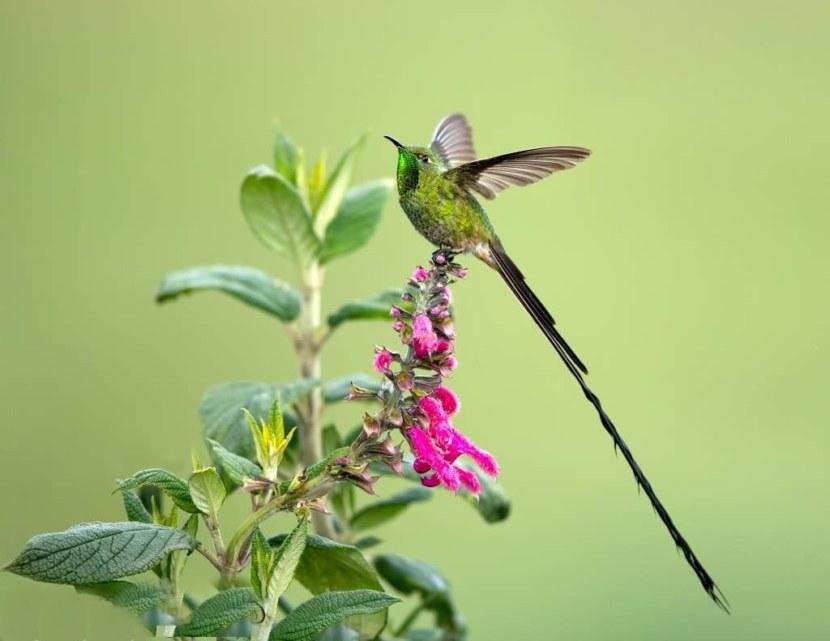Kolibri-32.jpg