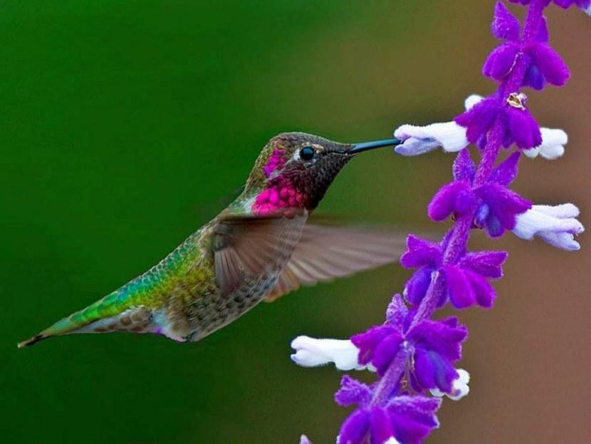 Kolibri-33.jpg