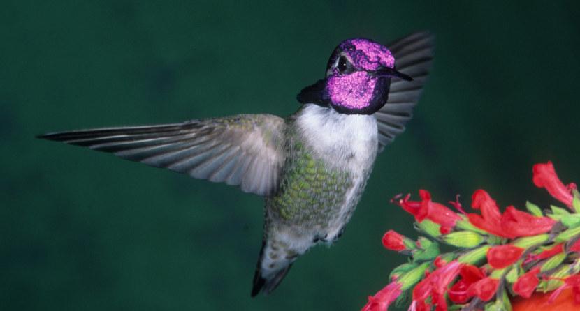 Kolibri-35.jpg