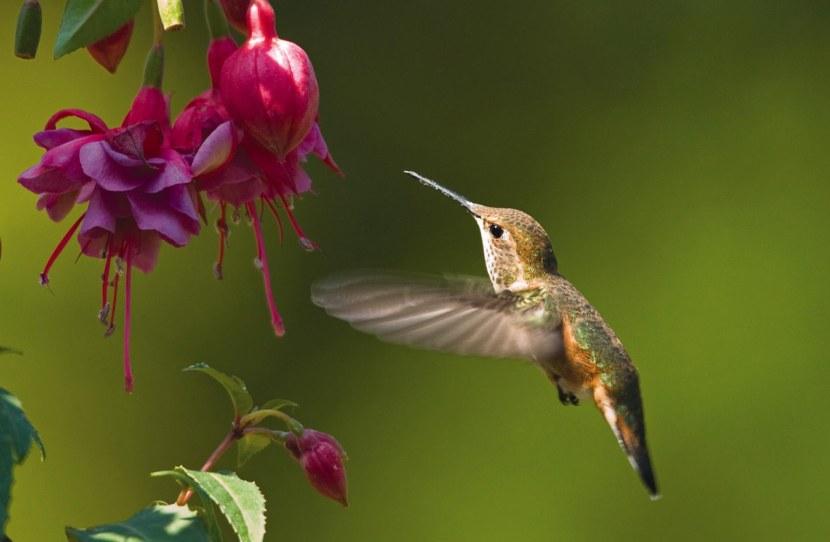 Kolibri-36.jpg