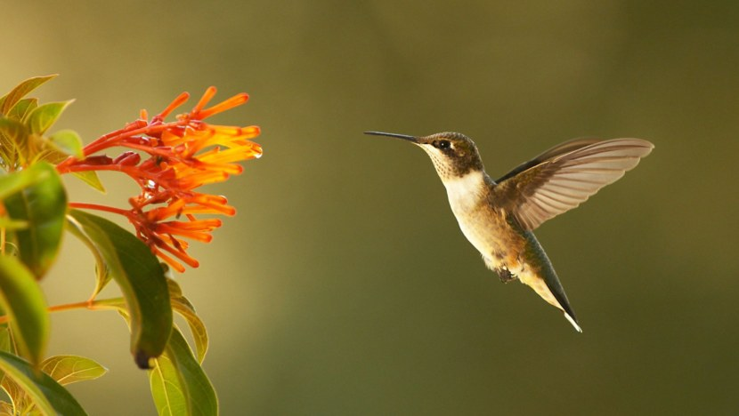 Kolibri-37.jpg