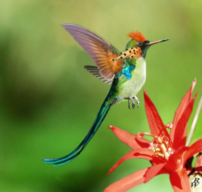 Kolibri-38.jpg