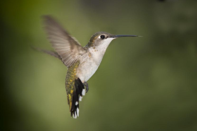 Kolibri-39.jpg