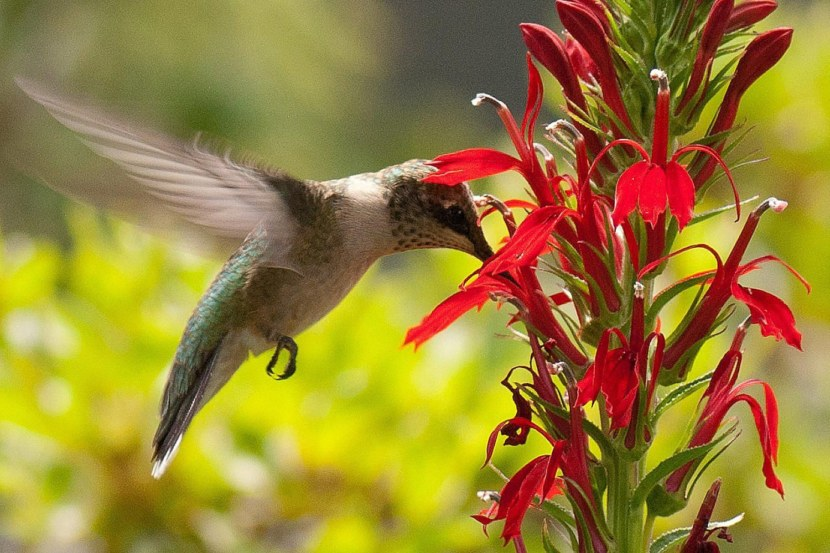Kolibri-40.jpg