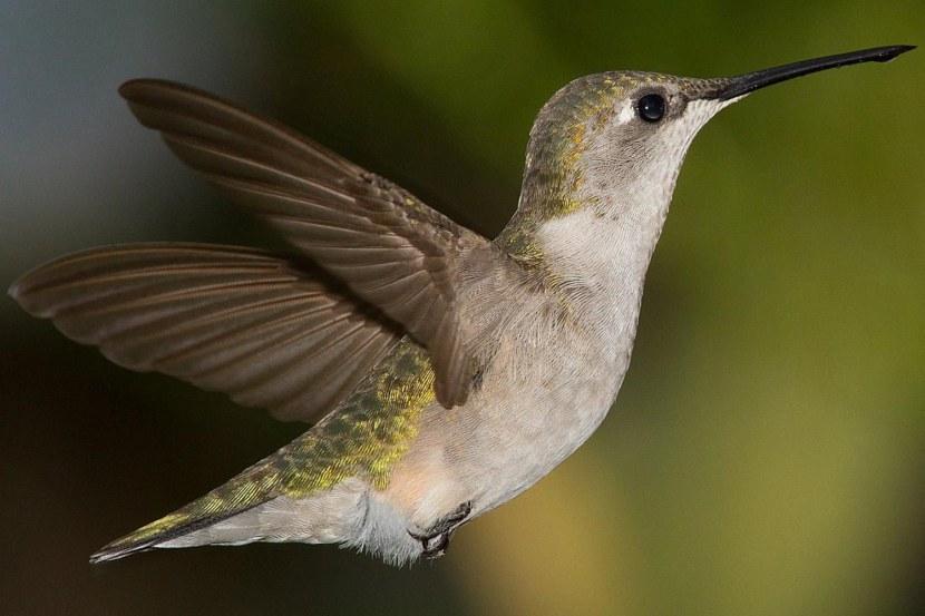 Kolibri-41.jpg