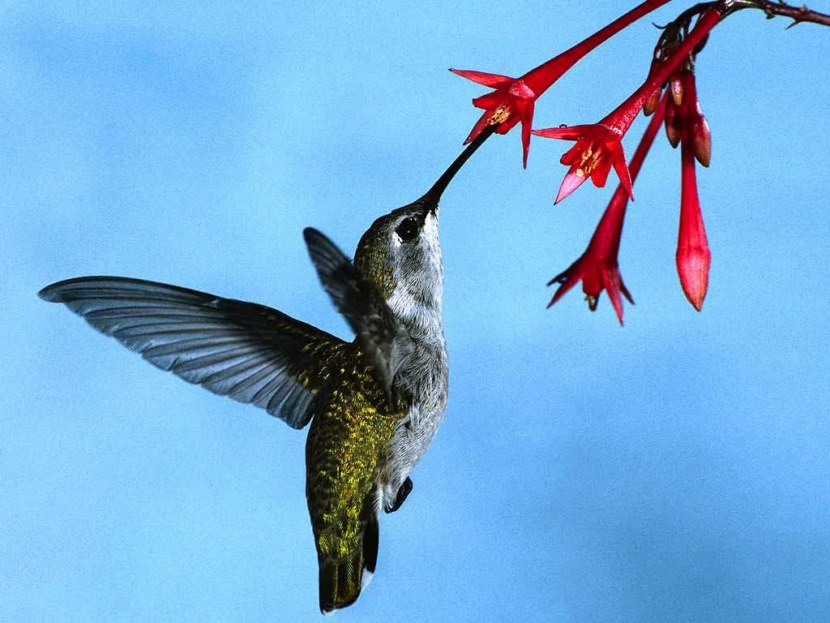 Kolibri-42.jpg