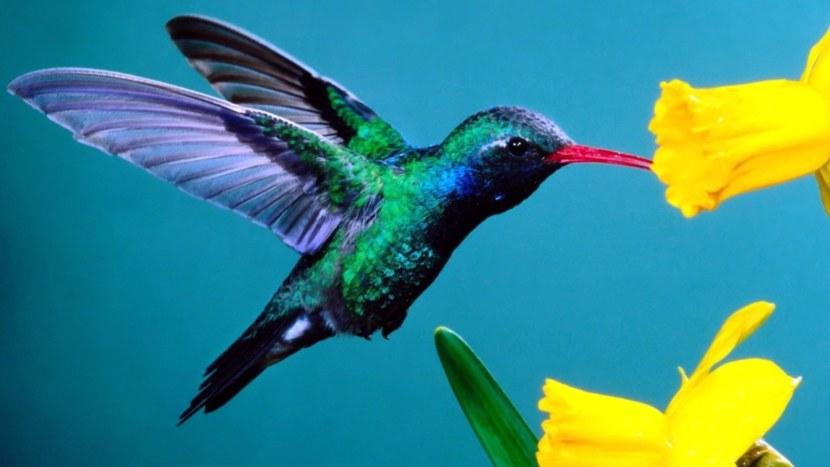 Kolibri-43.jpg