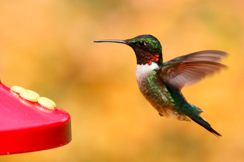 Kolibri-44.jpg