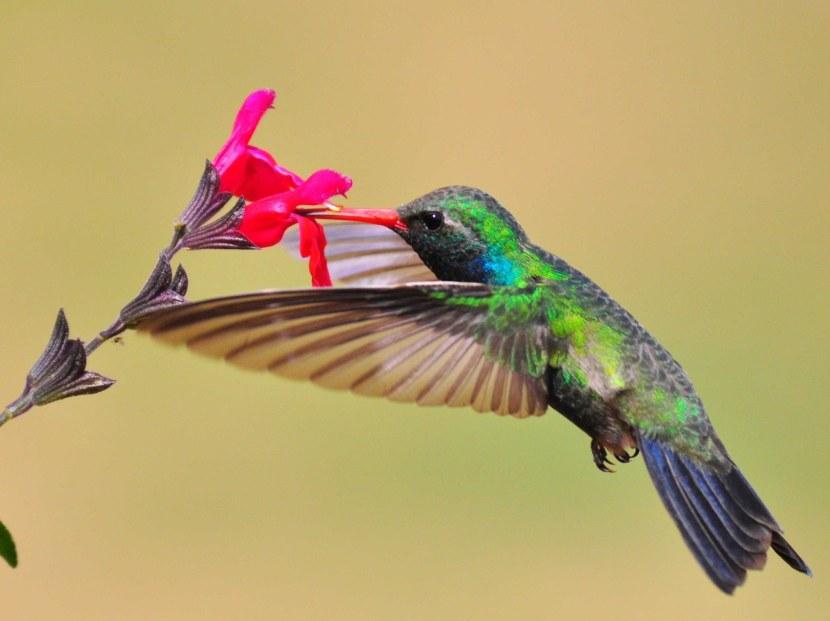 Kolibri-45.jpg