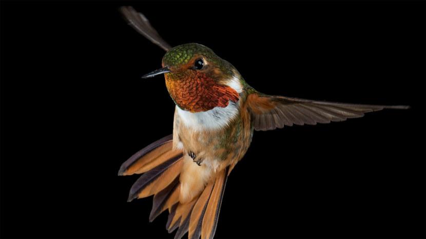 Kolibri-46.jpg