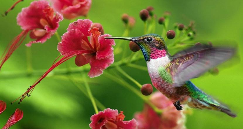 Kolibri-48.jpg