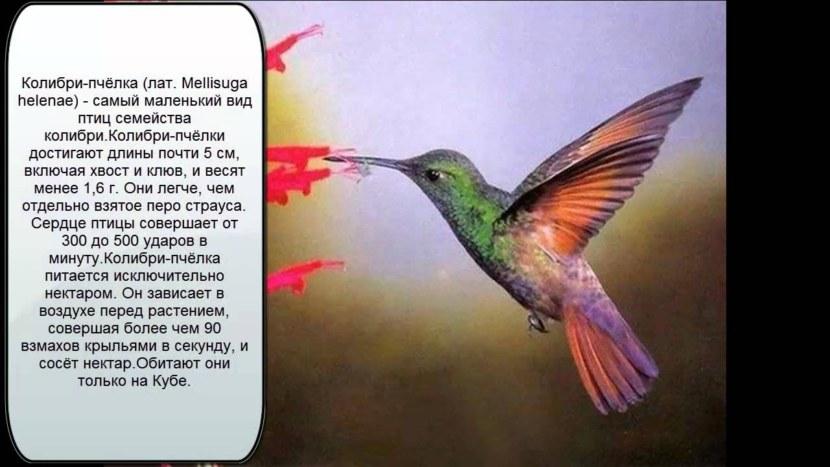 Kolibri-5.jpg
