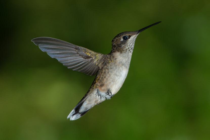 Kolibri-51.jpg