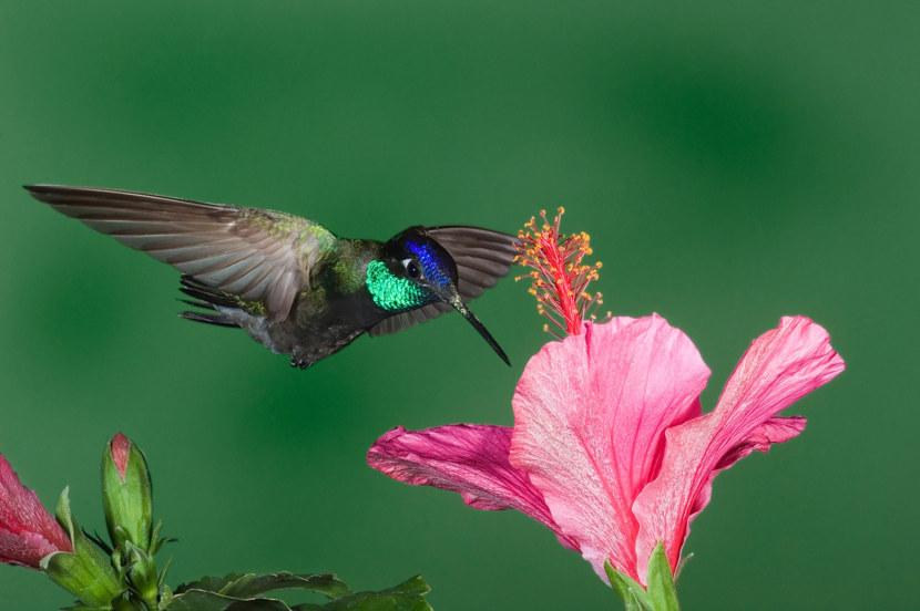 Kolibri-53.jpg