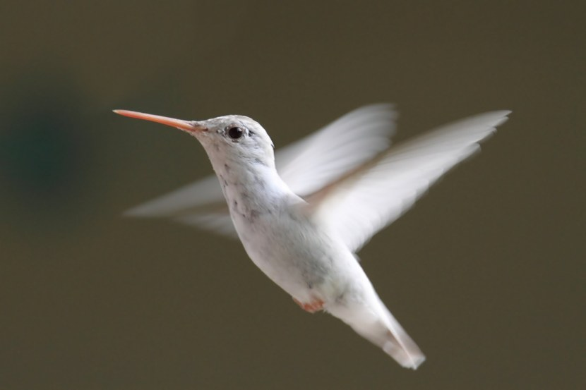 Kolibri-55.jpg