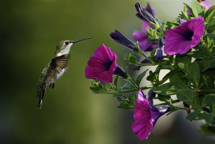 Kolibri-57.jpg