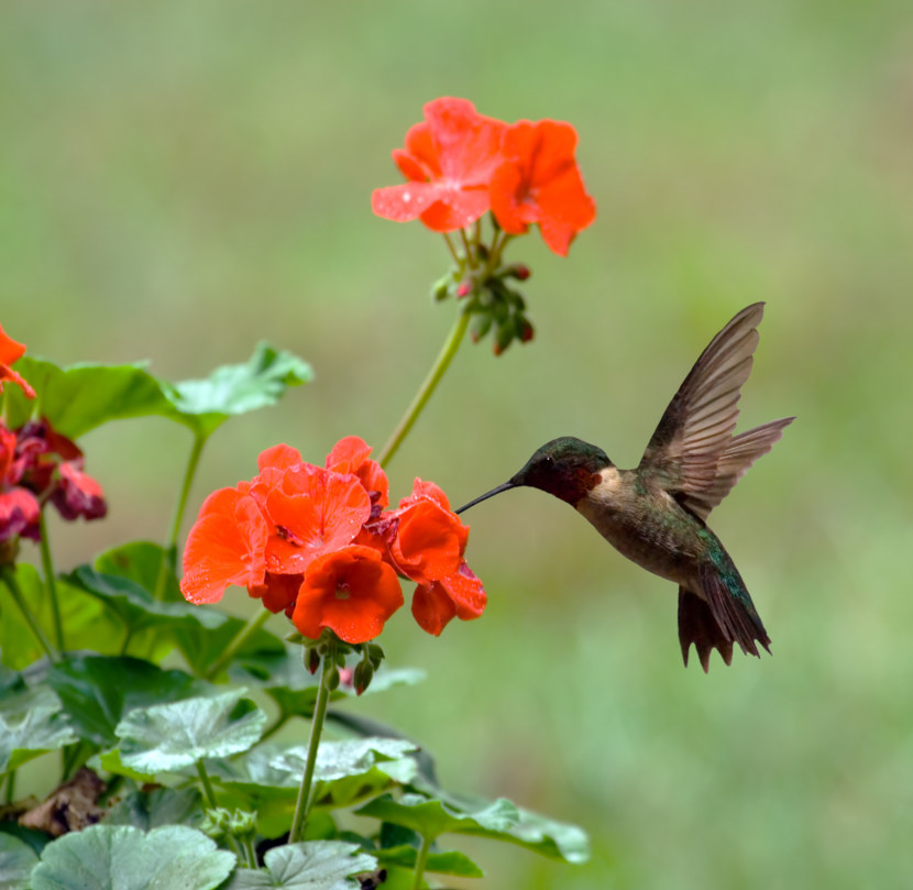 Kolibri-58.jpg