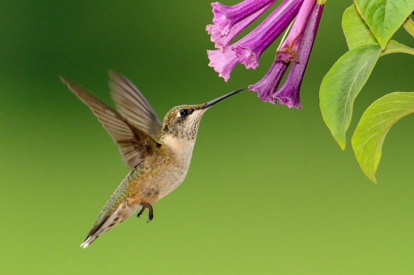 Kolibri-59.jpg