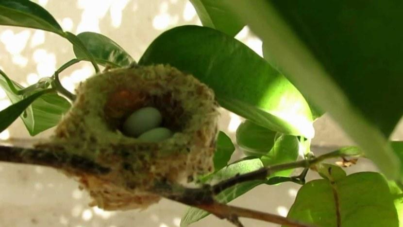 Kolibri-6-1.jpg