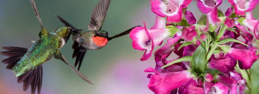 Kolibri-63.jpg