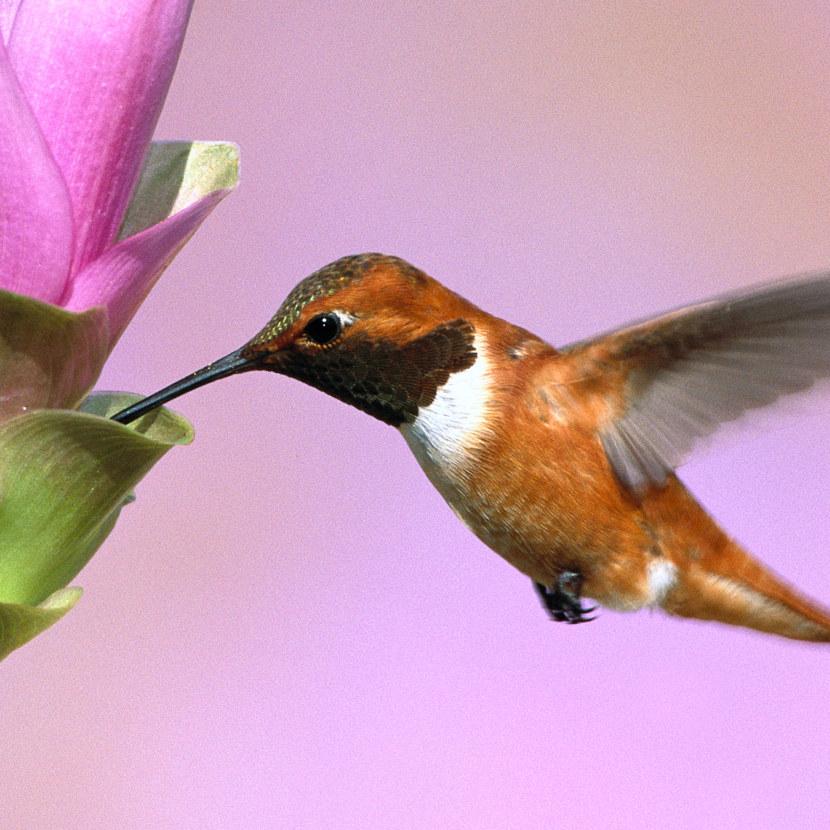Kolibri-68.jpg