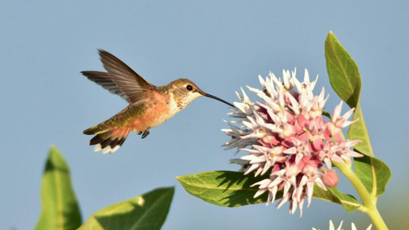 Kolibri-69.jpg