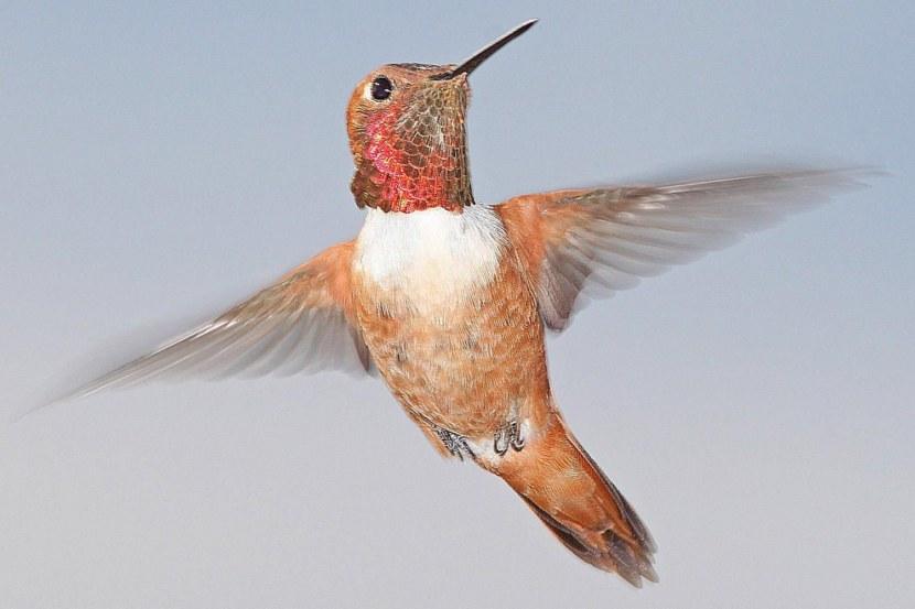 Kolibri-70.jpg