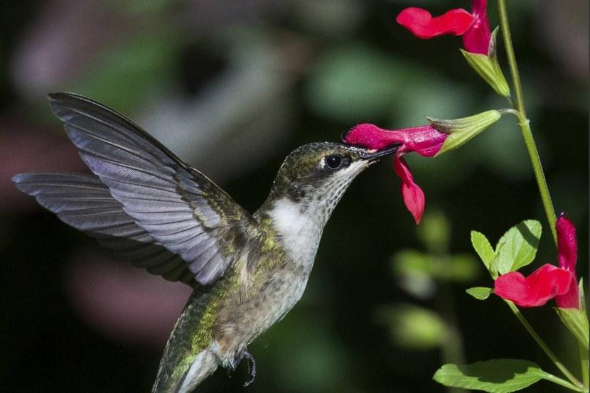 Kolibri-75.jpg