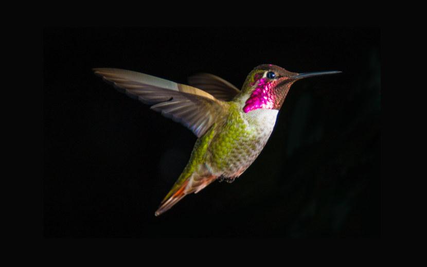 Kolibri-9.jpg