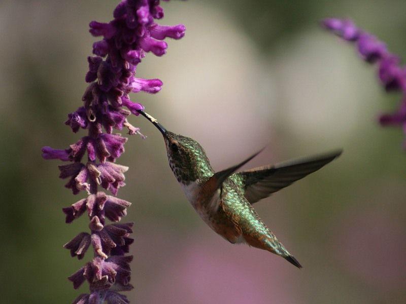kolibri_5_1.jpg