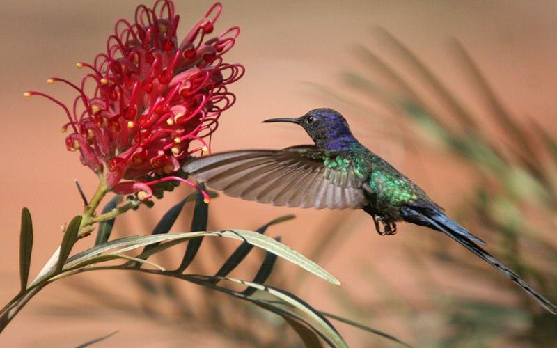 kolibri_9_1.jpg
