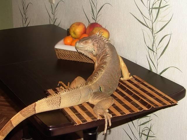 -кормить-ящерицу-в-домашних-условиях.jpg