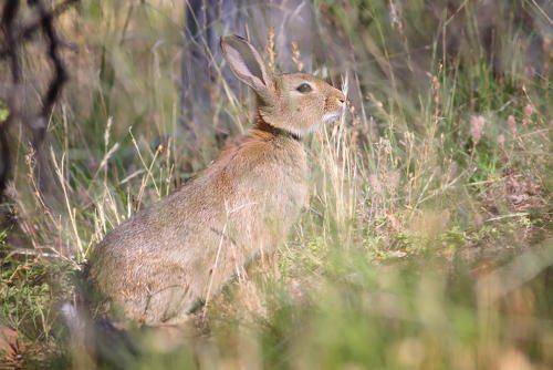 -кролик.jpg