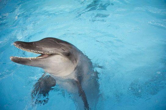 kropnozubiy-delfin-544x362.jpg